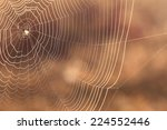 Spider's Web With Dew Drops...
