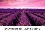 Lavender Field Summer Sunset...