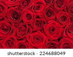 Stock photo beautiful red roses 224688049