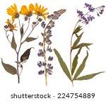 set of wild dry pressed flowers ... | Shutterstock . vector #224754889
