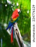 macro scarlet macaw | Shutterstock . vector #224776129