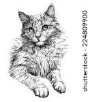 Cat Portrait. Hand Drawn...