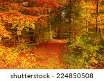 beautiful autumn colors in the... | Shutterstock . vector #224850508