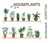 vector set of indoor plants in... | Shutterstock .eps vector #224907763