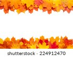 Autumn Golden Leaves Isolated
