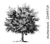 vintage detailed vector tree.... | Shutterstock .eps vector #22499719