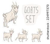 set of 4 characters goats.... | Shutterstock .eps vector #224997370