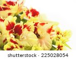 Red and yellow bright gladiolus \ horizontal \ close up  - stock photo