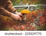 Man Hands Picking Mushroom...