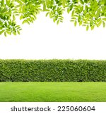 green leaves and green hedge... | Shutterstock . vector #225060604