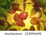 Colorful Autumn Leaves...