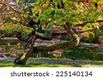 old contorted trees exhibited... | Shutterstock . vector #225140134