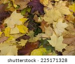maple leaves on the ground.... | Shutterstock . vector #225171328