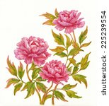 watercolor original painting ... | Shutterstock . vector #225239554