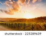 Vineyards in chianti - stock photo