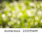 soft selective blur green bokeh | Shutterstock . vector #225295609