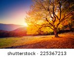majestic alone beech tree on a... | Shutterstock . vector #225367213