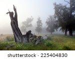 Autumn Landscape Dead Wood In...