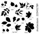 Vector Set Of Leaves...