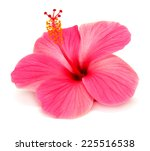 Pink Hibiscus Isolated On Whit...