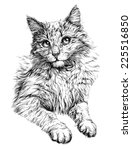 Cat Portrait. Hand Drawn...
