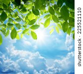 green leaves and sun | Shutterstock . vector #225521110