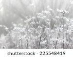 Foggy Landscape. Field In...
