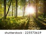 sunlight in the forest   Shutterstock . vector #225573619