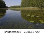water lily  | Shutterstock . vector #225613720