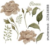 roses and leaves  watercolor ...   Shutterstock . vector #225618088
