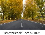Autumn Trees Along A Lonely Road
