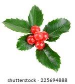 leaves of mistletoe with... | Shutterstock . vector #225694888