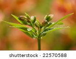 flower with raindrops - stock photo