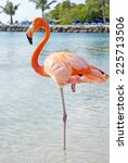 Pink Flamingo Standing In One...
