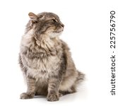 gray cat isolated on white... | Shutterstock . vector #225756790