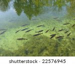 Fish in clear lake - stock photo