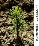 tiny fir tree grown from seed   Shutterstock . vector #225832744