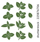 mint leaves set. vector | Shutterstock .eps vector #225876706