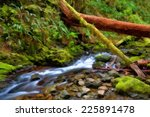 small creek in rainforest ... | Shutterstock . vector #225891478