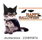 Cat In Black Cloak  Isolated O...