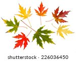 seven high resolution autumn... | Shutterstock . vector #226036450
