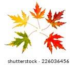 five high resolution autumn... | Shutterstock . vector #226036456