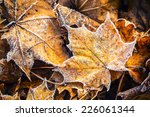 Frozen Autumn Frost Cold...