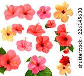 collection of colored hibiscus... | Shutterstock . vector #226145638