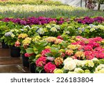 Rows Of Flowers For Sale At A...