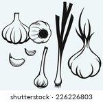 heads of garlic. young garlic...   Shutterstock .eps vector #226226803