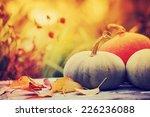 autumn nature concept. fall... | Shutterstock . vector #226236088
