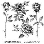 Stock vector hand drawn flower set rose collection 226308970