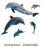 set of jumping dolphins isolated on white background - stock photo