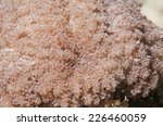 soft coral | Shutterstock . vector #226460059